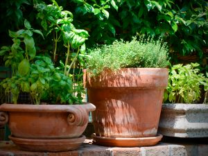 le-jardin-aromatique